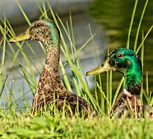 Quacks at work by Nancy Rohrig