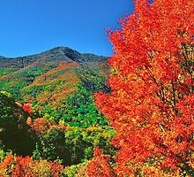AUTUMN,BLUE RIDGE PARKWAY by Chuck Wickham