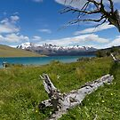 Laguna Azul, Torres del Paine National Park, Chile by Coreena Vieth