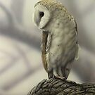 Barn Owl by Christopher Pope