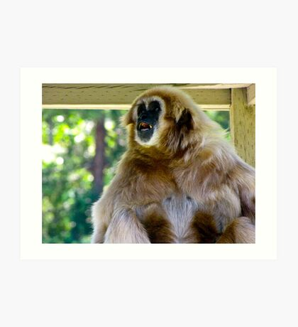 Yelping Gibbon - Wildlife Safari, Winston OR Art Print