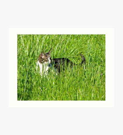 Sneaking Cat in a Field Art Print