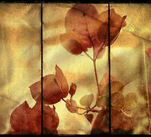 ~ Bougainvillea in Triptych ~ by Lynda Heins