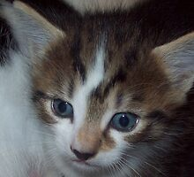Baby Ziggy by Kable