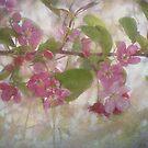 Pretty Pink Blossoms by vigor