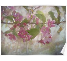 Pretty Pink Blossoms Poster