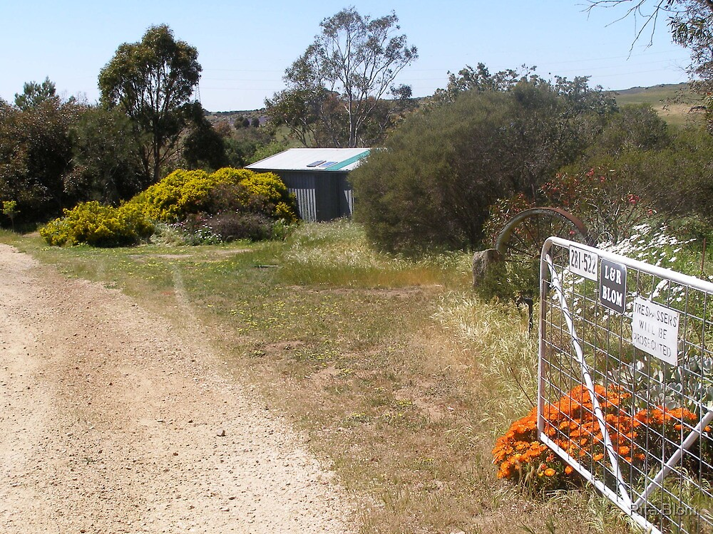 'OUR PATCH!' taken from the gate, Mount Pleasant S.A. by Rita Blom