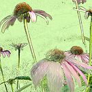 Cone Flowers No. 1 by Sarah Butcher