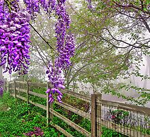 Wisteria and the Mist by Kate Eller