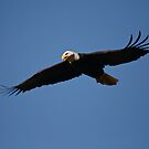 Eagle Hunting... by RichImage