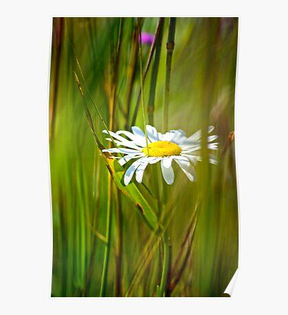 White Flower in the brush Poster