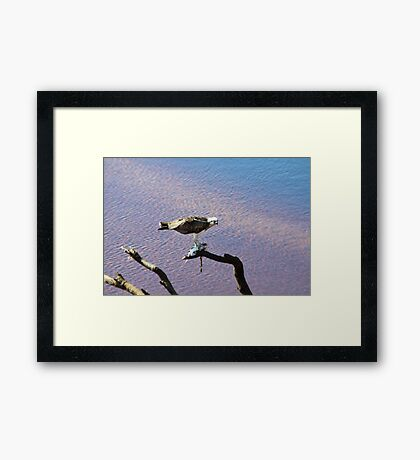 Successful Fishing Framed Print