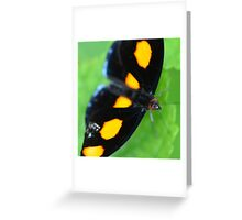 Orange Shoemaker Butterfly Greeting Card