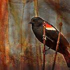Rust-Wing Blackbird by Jessica Dzupina