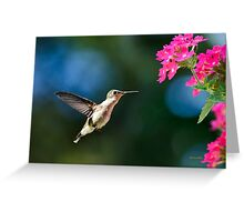 Humming bird with Pink Flowers Greeting Card