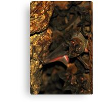 Bat Cave - Brazil Canvas Print