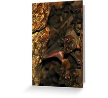 Bat Cave - Brazil Greeting Card