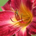 *London KY Daylily* by DeeZ (D L Honeycutt)