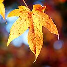 Autumn In My Heart by ~ Fir Mamat ~