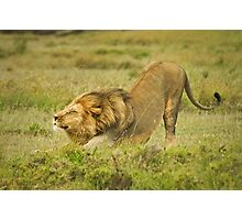 Simba facing dog Photographic Print
