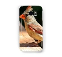 Female northern cardinal in the morning sun Samsung Galaxy Case/Skin
