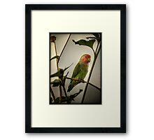 The Lovebird  Framed Print