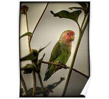 The Lovebird  Poster