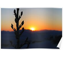 Plant in the sunset Poster