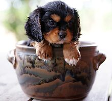 Potted Puppy (1) by Tanya Rossi