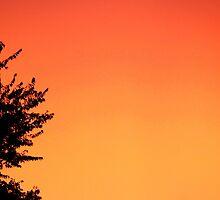 Orange sky and the tree by Bernardo Trindade