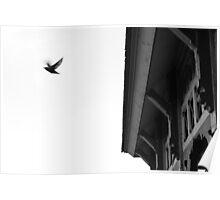 bye bird Poster