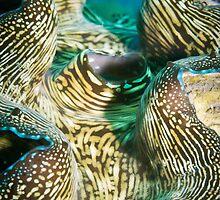 Giant clam by JonMilnes