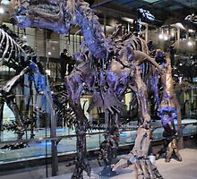 Wonderful Iguanodon by skeletonsrus