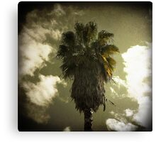 palm thursday Canvas Print