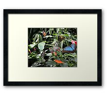 Jungle of Butterfly's Framed Print