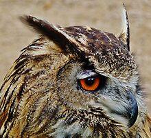 Long Eared Owl. by artfulvistas