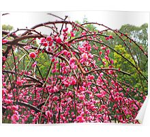 Weeping Cherry Tree My place :) Poster