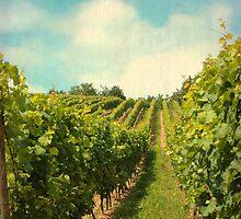 vineyard in july by Iris Lehnhardt