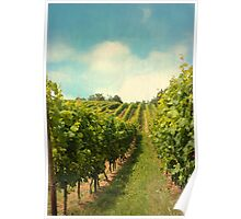 vineyard in july Poster