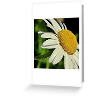 Love me love me not Greeting Card