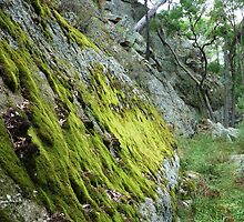 Moss in the gorge, Goulburn River, NSW by DashTravels