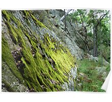 Moss in the gorge, Goulburn River, NSW Poster