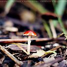 Little mushroon by fRantasy