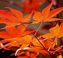 Seasons Change by © Loree McComb