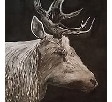 B+W Deer Portrait Photographic Print