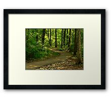 Path of Sunlight Dancing Framed Print
