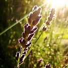Reaching for the sun by Tracy Friesen