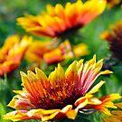 A bright day for the Arizona Sun by William Martin