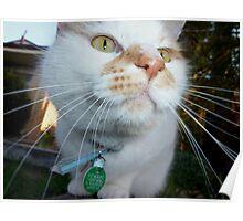 """""""Kiya"""" .......... Mr Dribbler.........Nosey Parker........ Poster"""