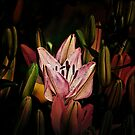 Lit Lily by Gary Smith